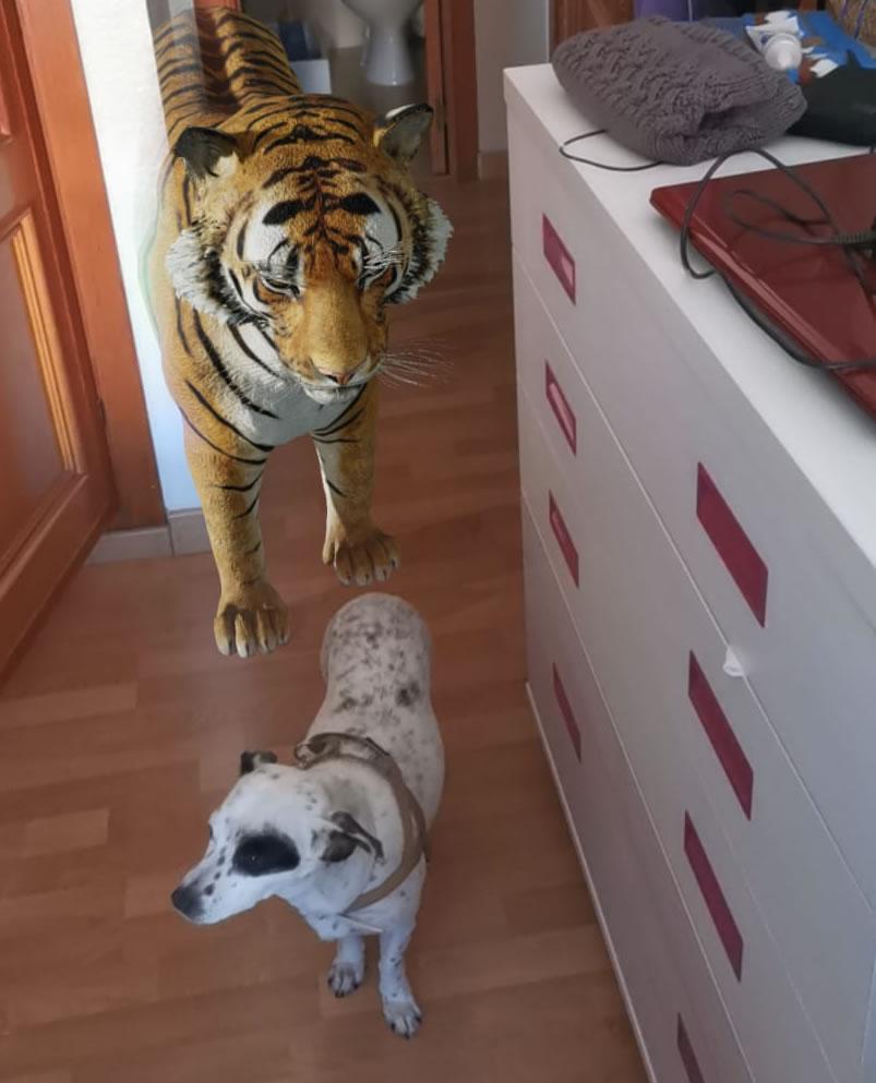Animales 3D en casa con Google