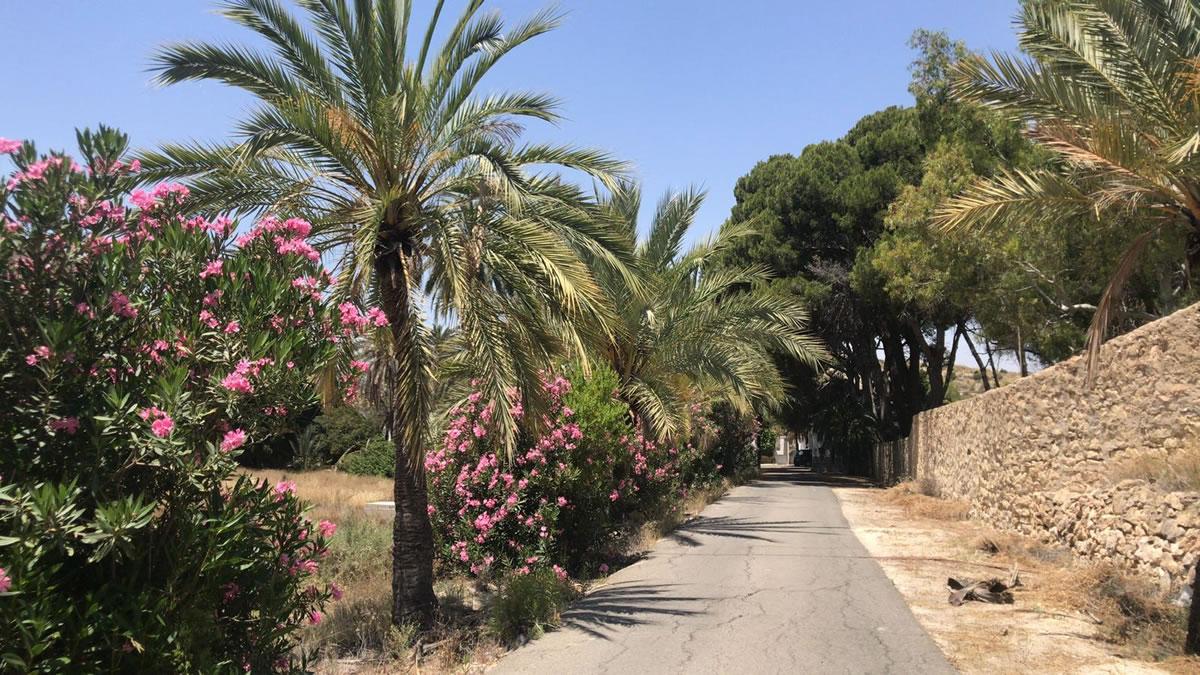 Jardines Club Cultural Brass Academy Alicante