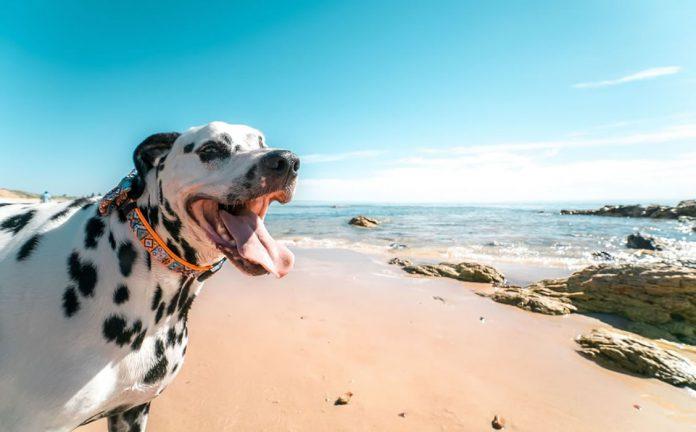 Playa para perros en Alicante