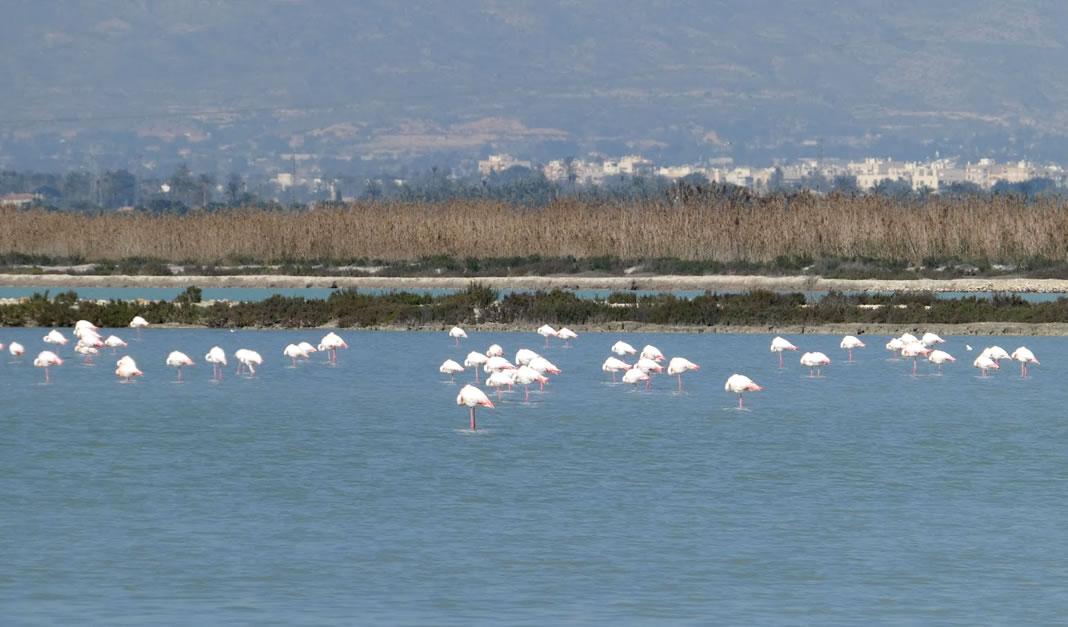 Parque Natural de las Salinas Santa Pola
